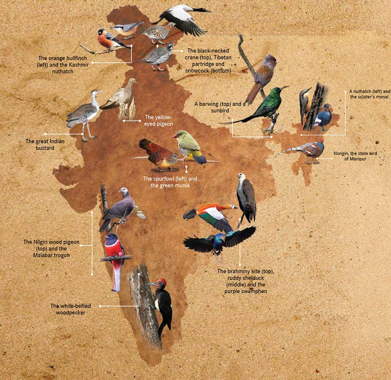 birding destinations in the India